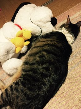 Diesp8D、issさんのネコちゃん、おやすみなさい。.jpg