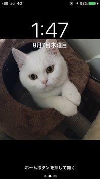 「CLOWD」、庵さん、「猫ちゃん、キャス」.jpg