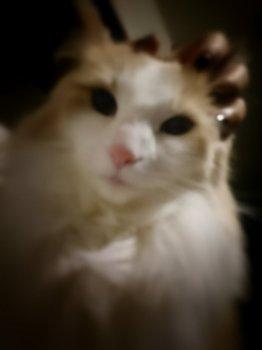 Scliam、KEITAさんの猫.jpg